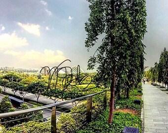 Singapore Garden & Surroundings