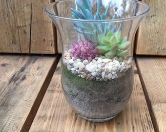 Mixed Succulent Terrarium