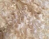 Teeswater locks Wool for spinning, washed, spinning fiber, roving 1 oz