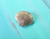 mermaid gold glitter shell hair clip - mermaid barrette, scallop shell hair clip, mermaid accessory, beach wedding