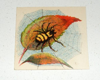Antique Small Victorian Card Spider on Web