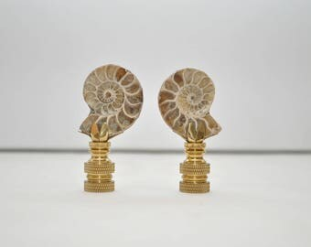 Lamp Finial - Ammonite Fossil Pair