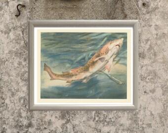 Dogfish Print, Wild Fish Print, Natural History, Home Decor, French Wild Animal, Trieb, Kids Bedroom Decor, 1947/2/91