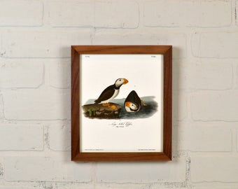 """Framed Audubon Bird Print """"Large Billed Puffin"""" Full Color Reproduction - Solid Natural Walnut Peewee Style - IN STOCK - Same Day Shipping"""