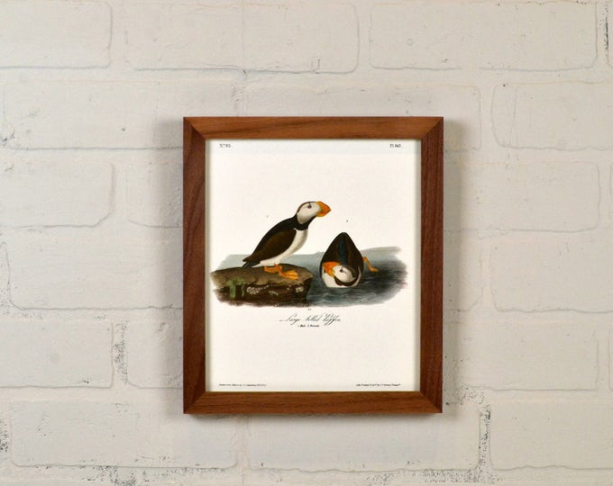 "Framed Audubon Bird Print ""Large Billed Puffin"" Full Color Reproduction - Solid Natural Walnut Peewee Style - IN STOCK - Same Day Shipping"