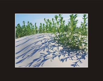 Dune vegetation late afternoon shadows Photographic Print matted in black North Carolina