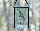 Pressed flower art, stained glass suncatcher dried flowers, Queen Anne Lace, Asparagus fern suncatcher ornament, nature inspired, flower art