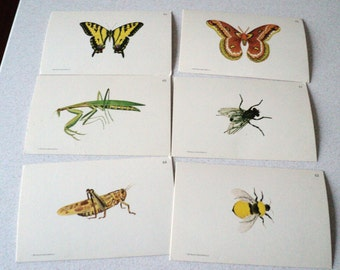 6 Vintage 1960s Flash Cards Of Insects Butterfly Moth