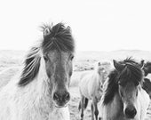 Horse Photography in Black and White | Icelandic Horses