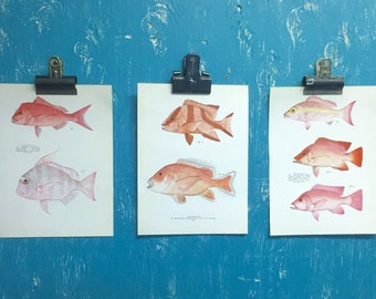 Vintage Tropical Fish Book Plates Set of 3 Paper Illustration Art Wall Decor in Pink Peach at CastawaysHall