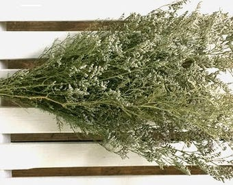 SALE Dried FLOWERS Lovely Airy Dried CASPIA Flower Bunch Wedding Flowers bunch flowers Shabby cottage Green Filler Flowers Dried Floral Folk