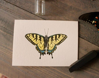 Tiger Swallowtail Notecards