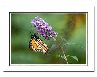 Monarch Butterfly on a Milkweed Flower Photo Note Card with Envelope, Blank inside, Greeting Card, Green, Purple, Thank You Card