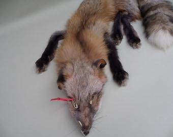 Dakota Gold Fox Pelt