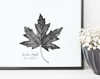 "Silver Maple Tree Leaf Print | 8"" x 10"" Illustration 