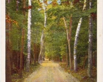 Harbor Springs, Michigan, Lake Shore Drive - Linen Postcard - Unused (N)