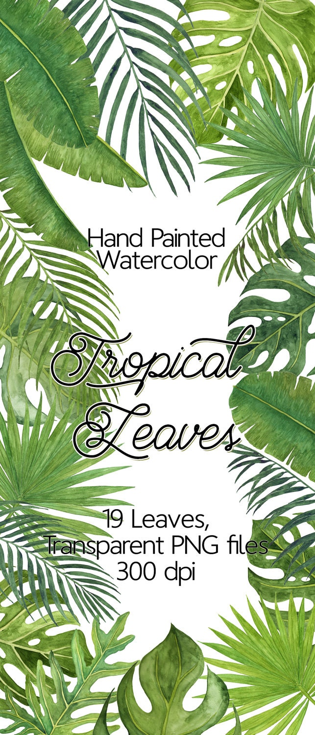 Tropical leaves watercolor leaves clip art monstera for Watercolor greenery