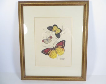 Vintage Framed Butterfly Print - Butterfly Color Plate