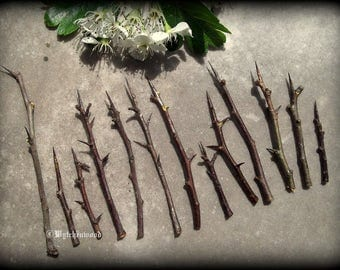 Hawthorn Spines: Witchcraft, Occult, Magic, Wicca