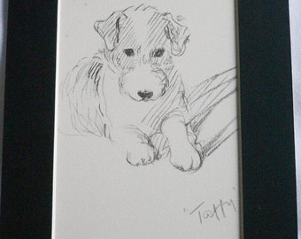 SALE TERRIER DOG Vintage Mounted 1937 'Mac' Lucy Dawson Taffy Wire haired terrier dog plate print Ideal   gift