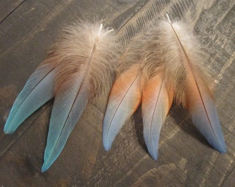 5 Macaw Parrot Feathers ~ Cruelty Free **Use Coupon Code FEATHERS20 and save 20% on all Feathers**