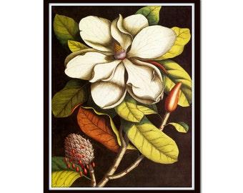Vintage Magnolia No. 55, Botanical Print, Home Decor, Cottage Decor, Wall Art, Illustration, Giclee, Art Print, Vintage Botanical, Magnolia