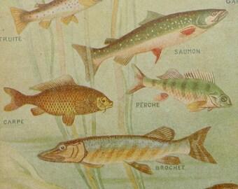 Fish drawing etsy for Koi larousse