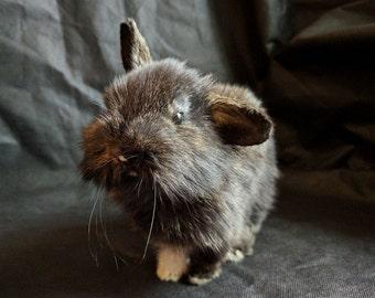 Bunny Lifesize Mount Rabbit Taxidermy Sculpture
