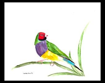 SALE Finch Bird art, finch original watercolour painting, finch art, colourful bird painting, finch illustration