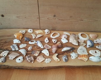 50 Drilled  Natural Sea Shell Fragments Shards Jewelry and Craft Supplies