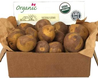 Masquerade Seed Potato 2 Lbs. Certified Organic Purple and Yellow Seed Potatoes- Spring Shipping Non-GMO