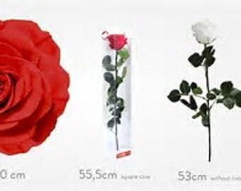 Rose with stem, Single Rose, Preserved Single Rose, Preserved Rose With Stem, Simply Beautiful !