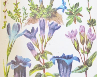 """1950s ALPINE FLOWER Book, 26 Color Plates w 207 Flowers, Swiss Printing, English French German, 5"""" x 8"""", Edelweiss, Enzian,"""