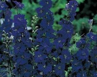 Delphinium-Blue spire- 50 seeds