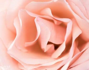 Pink Rose Photo, Fine Art Macro Photography Print, Pink, Nursery decor, Girl's room wall art, Bedroom Decor, flower photo print