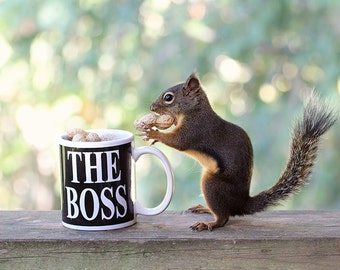 Boss Gifts, Funny Gift for Her, Squirrel Print, Gift for Boss, Funny Gift for Him, Girl Boss, Lady Boss, Boss Lady, Promotion Gift