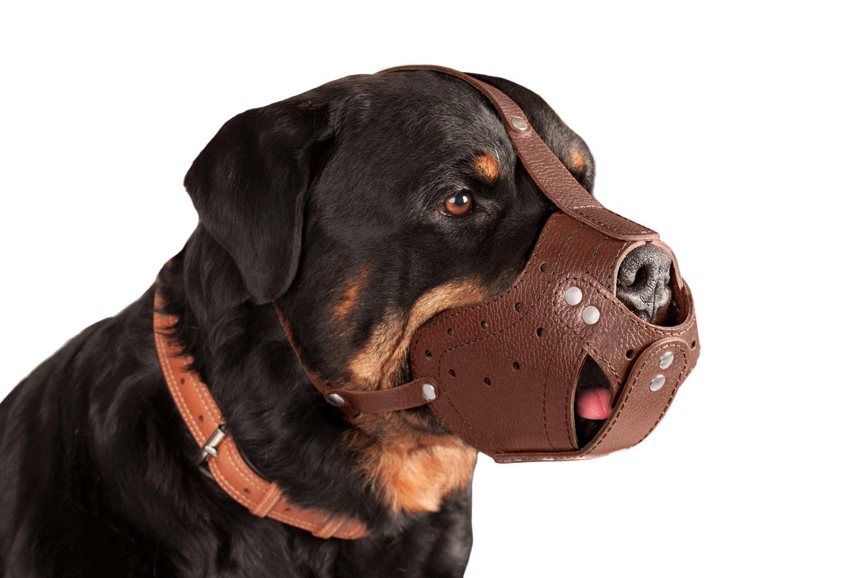 Corbeille sécurisée en cuir chien museau Rottweiler noir brun