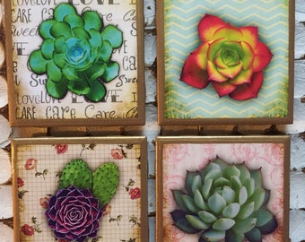 COASTERS!! Succulent coasters with gold trim