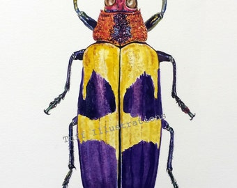 Watercolor Beetle print from original painting: Chrysochroa buqueti