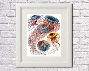 Jellyfish print antique botanical print Vintage Beach illustration Coastal wall art Ernst Haeckel Print  Art Nouveau Poster 0484