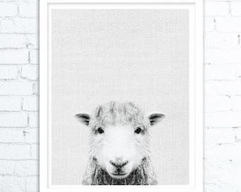 Farm animal Art, Sheep print, Farm animal print, Farmhouse decor, Farm animal wall art, Sheep art, Sheep wall art,Animal room decor