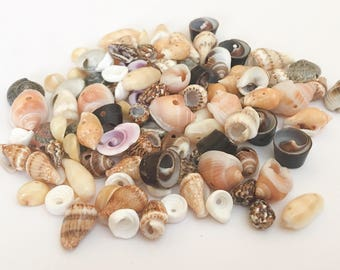 100+ shell beads, small shell beads, natural shell beads
