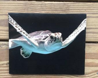 Sea turtle canvas photo - sea turtle photo - sea life photo- photo canvas - beach house decor - turtle lover art - Ocean Life art - canvas