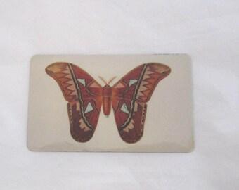 Moth Magnet