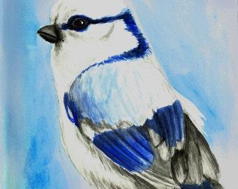 Northern Jay Bird Watercolor Print