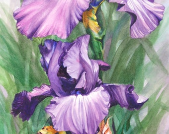 IRIS, botanical watercolor giclee art print, vertical wall home decor, 13 x 24, Shades of Violet, Phyllis Nathans