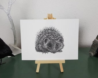 Hedgehog Art Print of Pen and Ink illustration; British Wildlife series