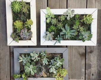 Succulent Wall Planter Hanging Living Wall Picture Frame