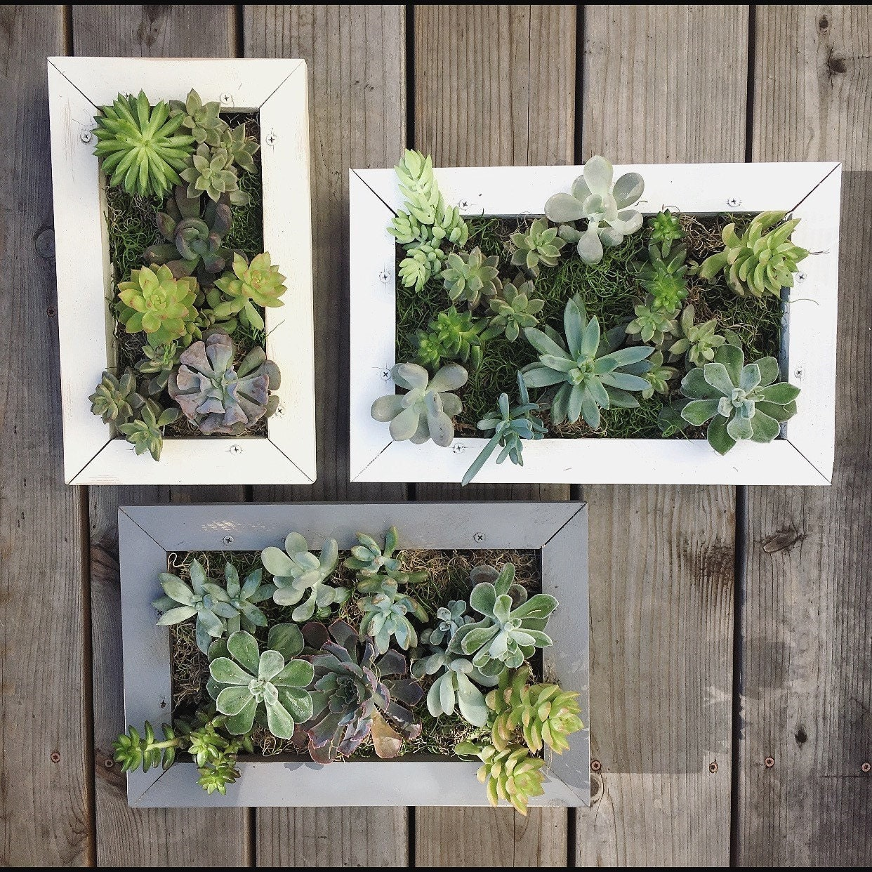 Succulent wall planter hanging living wall picture frame for Indoor succulent wall