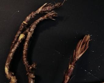 Oregon Grape Root, Herbs, Tea